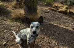 Desert dog in her natural habitat